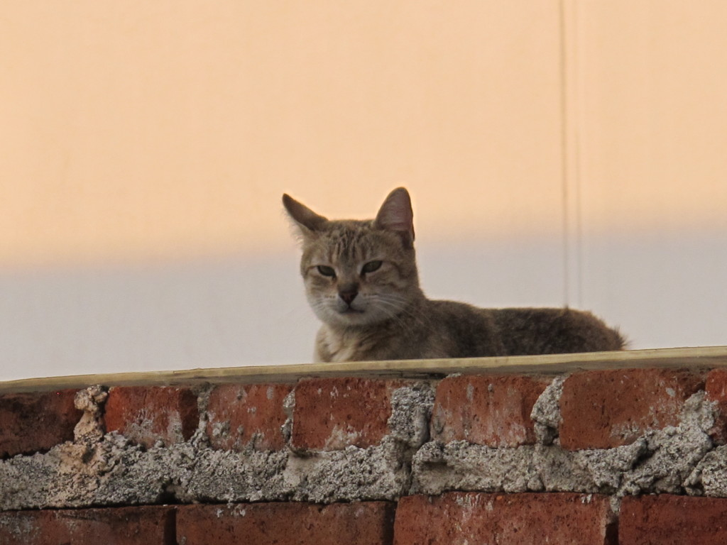 El gato, our neighbour!