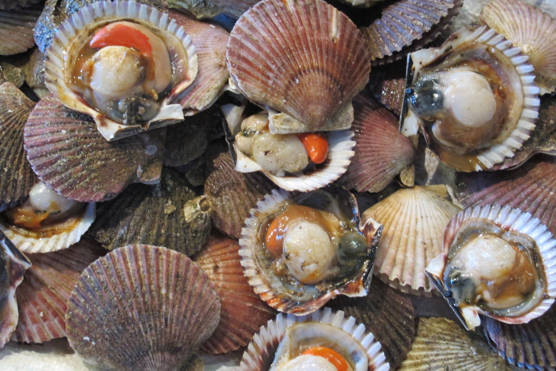 Fresh Scallops at Mercado Central, Santiago